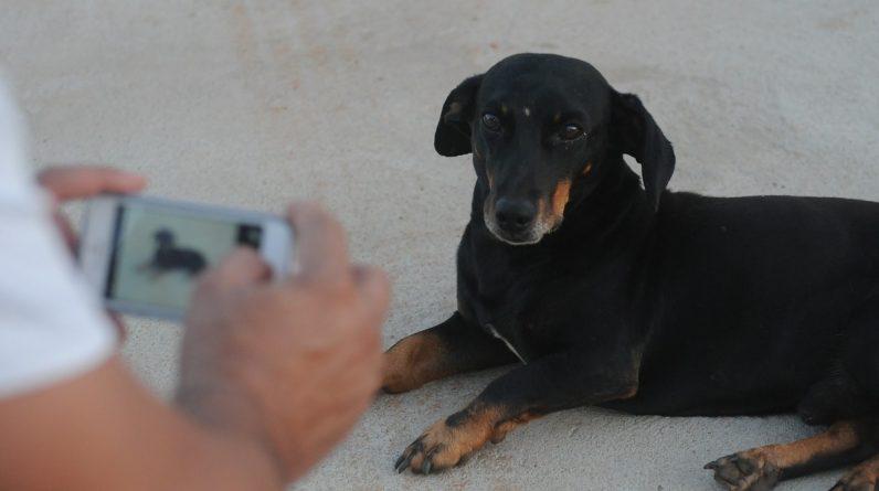 smartphone dog